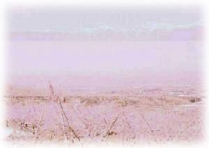 富士山麓の桜の季節